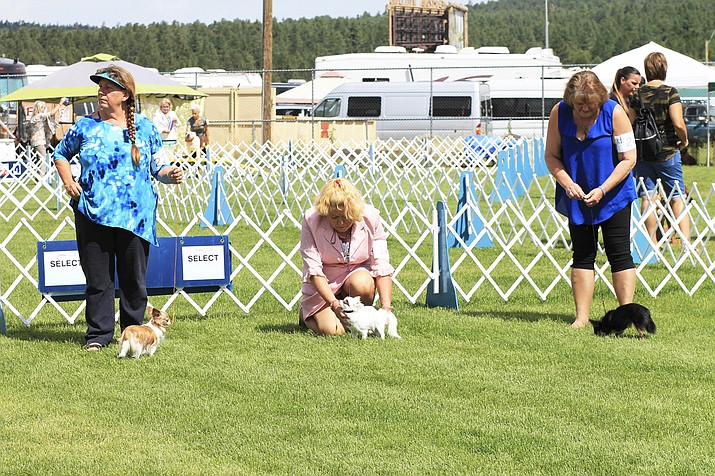 Competitors gather at Cureton Park in 2018 for the 26th annual Flagstaff Kennel Club Dog Show sponsored by the American Kennel Club. More than 5,000 spectators and participants traveled to Williams for this year's show. (Photo/WGCN)