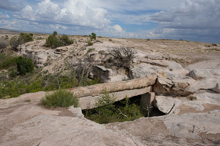 Environmental groups are trying to halt a plan by the Bureau of Land Management to lease more than 4,000 acres of land near the Petrified Forest National Park for oil and gas exploration. (Loretta Yerian/NHO)