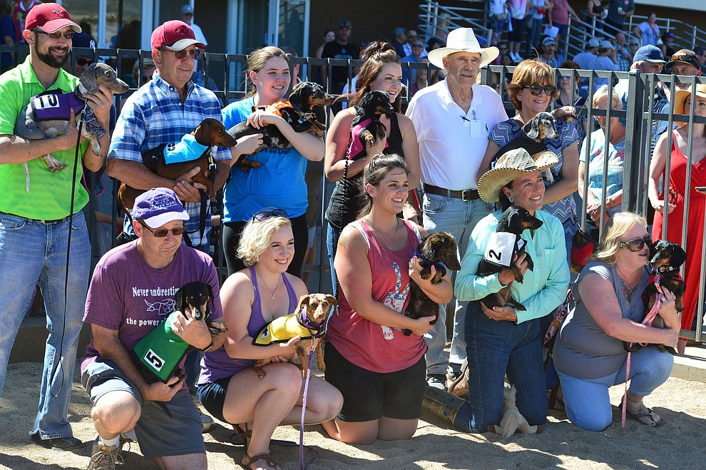 The weiner dog contestants in the first race at Arizona Downs in Prescott Valley Saturday July 20, 2019. (Les Stukenberg/Courier)