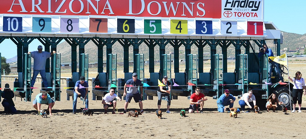 Weiner dog racing action at Arizona Downs in Prescott Valley Saturday July 20, 2019. (Les Stukenberg/Courier)