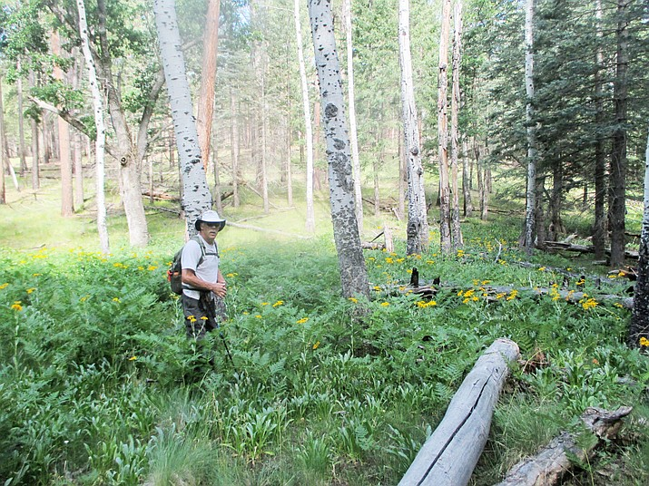 Hiker Rex Naumetz pauses to enjoy the sunflowers and aspen on the Cabin Loop Trail. (Stan Bindell/NHO)
