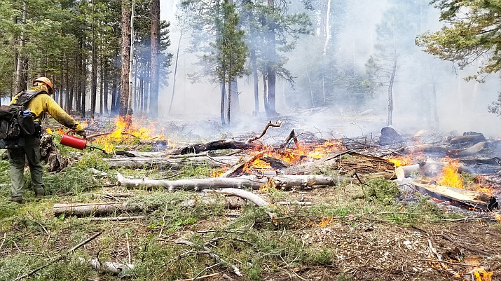 Firefighters perform holding and firing operations during the Castle Fire on the North Kaibab Ranger District July 19. (Photo by Rachael Grabenstein/Kaibab National Forest)