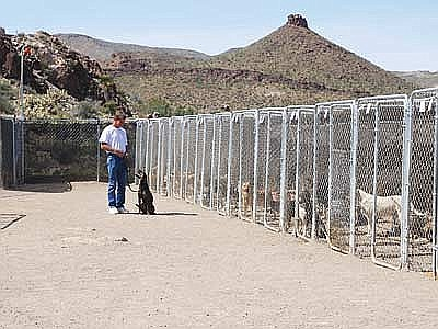 Just think, Barney, Gertrude, Shorty and I, along with the many other residents of the various shelters and sanctuaries, are waiting for you to visit us. (Butch Meriwether/Courtesy, file)