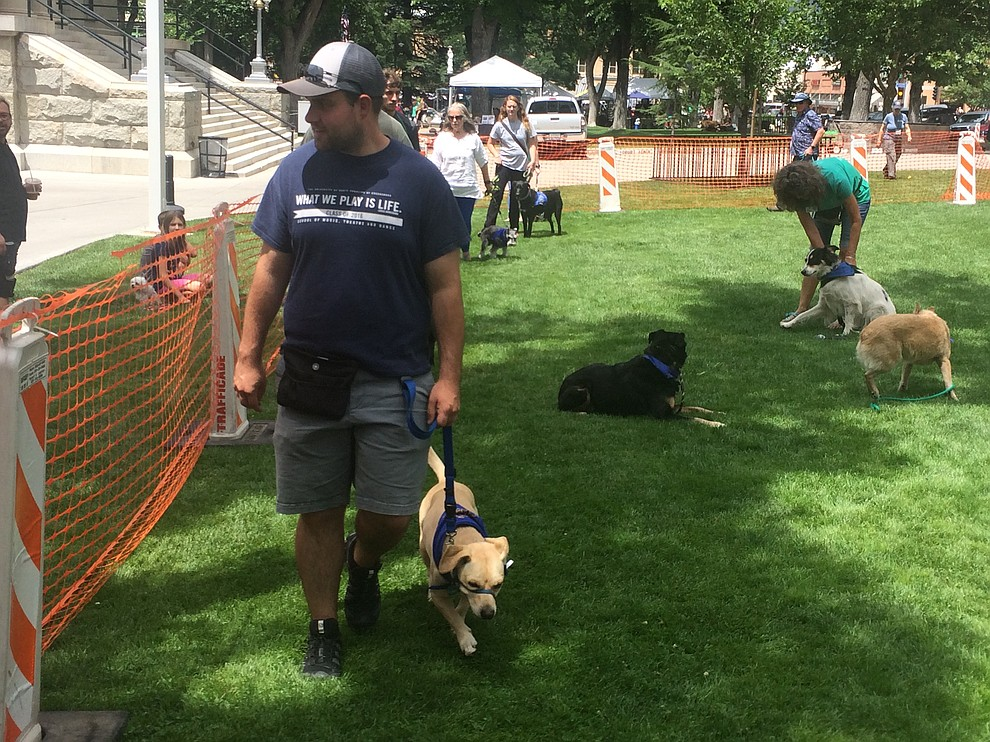 Dogs and their humans take part in a demonstration of Andy Lloyd's Dandy Dawgs Dog Training at the Woof Down Lunch event at courthouse plaza Saturday, Aug. 3. (Jason Wheeler/Courier)
