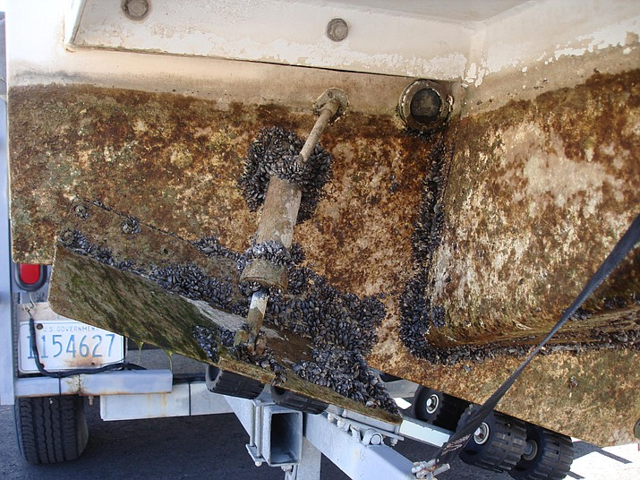 Inspectors at Lake Tahoe quarantined two boats, one from Arizona, with quagga mussel infestations July 31. (Photo/U.S. Bureau of Reclamation)