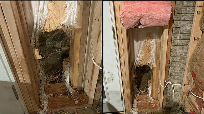 Bear breaks into house, leaves by pushing through a wall
