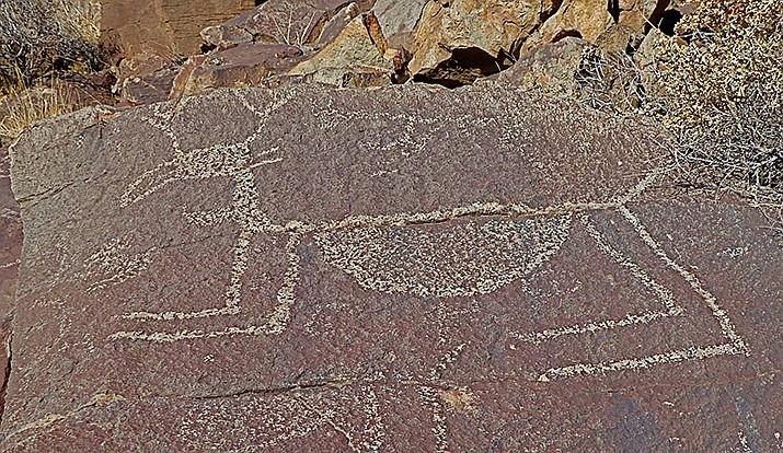 Large petroglyph of a pregnant deer. (Nigel Reynolds/Courtesy)