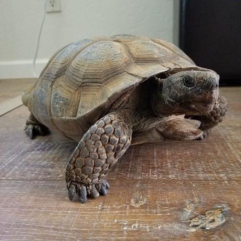 An unexpected visitor, actually a wild animal! (Robert Edwards/Courtesy)