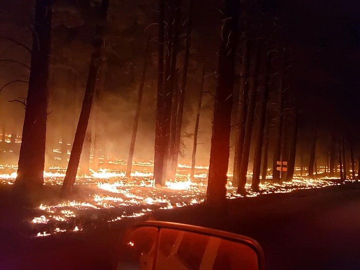 This photo shows firefighters taking advantage of cooler nighttime conditions to introduce fire into the ponderosa pines in the anticipated path of the Sheridan Fire. By doing this, it helps to reduce the potential for extreme heat and high intensity fire of the advancing fire front during the heat of the day. The Sheridan Fire is burning 23 miles northwest of Prescott and has charred an estimated 9,826 acres. (PNF Facebook Page/Courtesy)