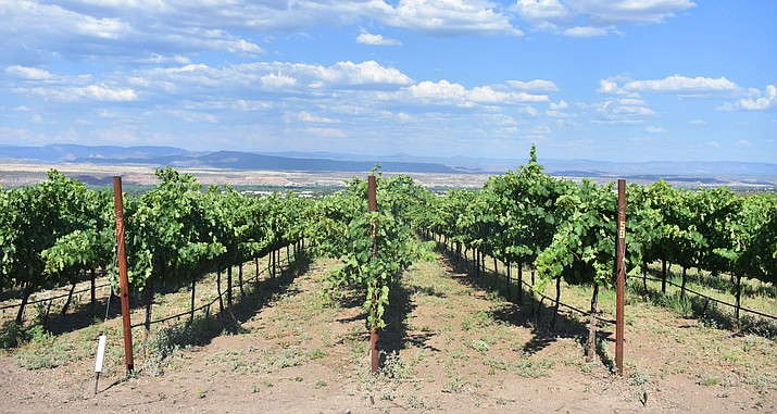The USA Today staff asked a panel of wine industry experts to pick their favorite American AVAs and wine regions, and the newspaper's readers voted for their favorites from a pool of 20 nominees. The Verde Valley ranks fourth on the list of U.S. locations. VVN Halie Chavez