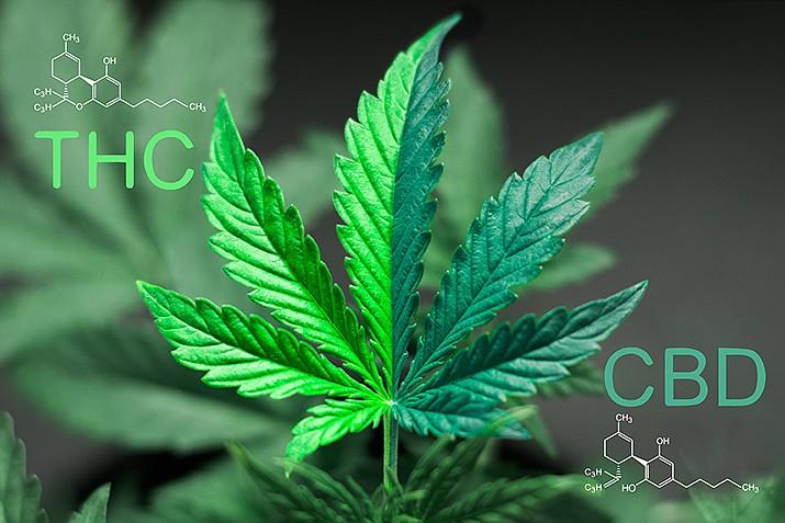 A marijuana plant. (Photo by Henrike, cc-by-sa-2.5, https://bit.y/2MK9Abe)