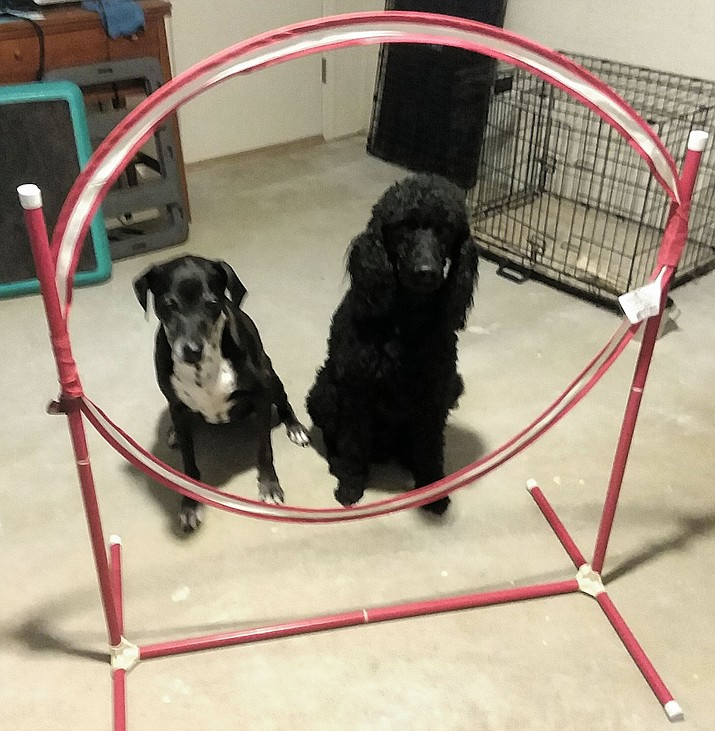 "BoJay and Lacy are waiting for the command ""Jump."" Their training room provides options for a little exercise. (Christy Powers/Courtesy)"
