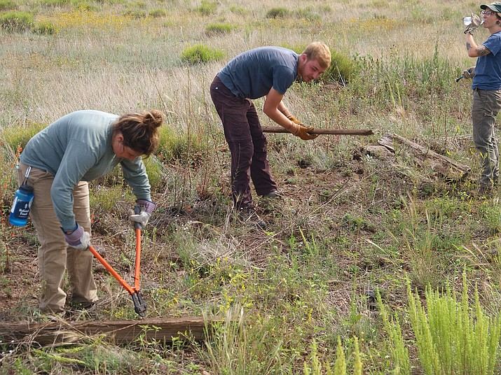 Volunteers work on fences to promote pronghorn migration in Garland Prairie. (Arizona Antelope Foundation/photo)