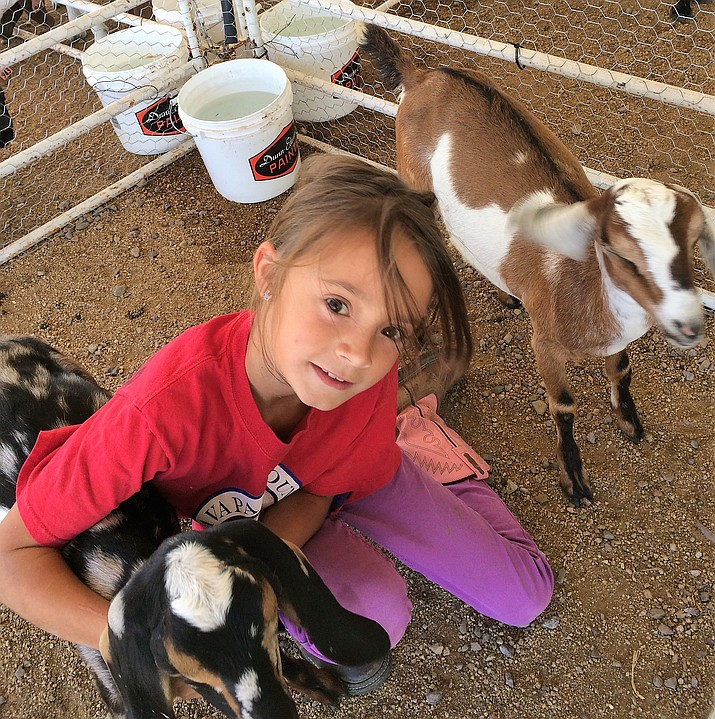 Grayson Mazy, 9, poses Sept. 4 with Constellation, left, and Parsley, two kids she and her siblings brought to show at the Yavapai County Fair. (Sue Tone/Courier)