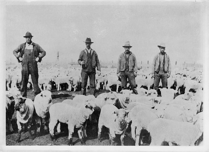 From left: Bill Morgan, sheep inspector, with Simon Leon and Joe Pouquette and their sheep band. (Photo/Williams Historic Photo Archive)