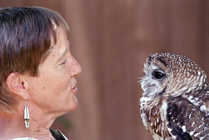 "In this a July 11, 2002, file photo, Dr. Kathleen Ramsay gets the attention of ""Manchado,"" a Mexican Spotted Owl at the Wildlife Center near Espanola, N.M. A federal judge has halted tree-cutting activities on all five national forests in New Mexico and one in Arizona until federal agencies can get a better handle on how to monitor the population of the threatened owl. The order issued earlier Sept. 2019, out of the U.S. District Court in Tucson covers 18,750 square miles. (AP Photo/Neil Jacobs, File)"