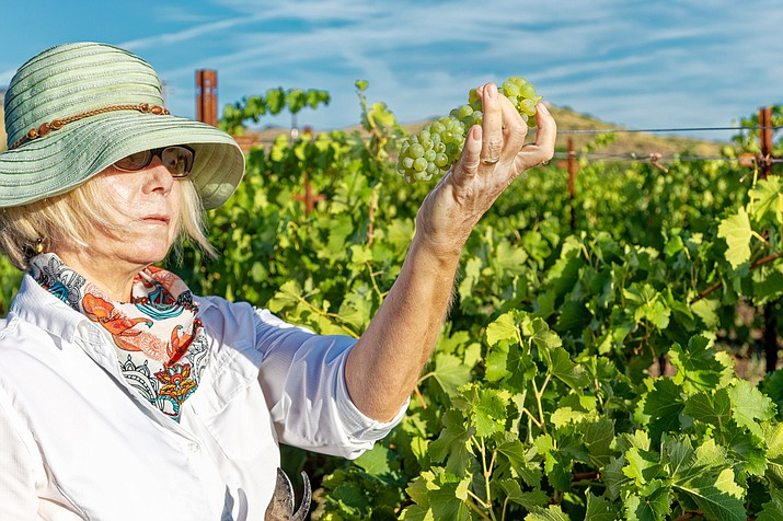 A number of awards for progress in the wine industry have been bestowed upon Verde Valley entities lately. The latest was a statewide environmental award, given to Yavapai College's Southwest Wine Center. Courtesy of Southwest Wine Center