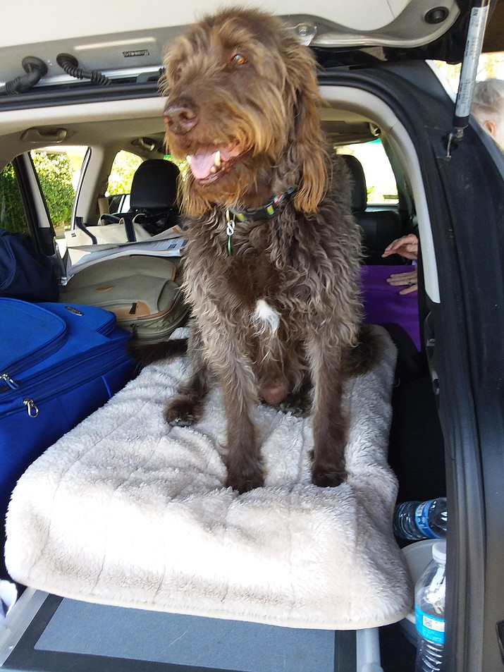 Walker, my dog nephew, now has a ramp to help him enter into his comfy place in the van as his owners prepare for a cross-country journey. (Christy Powers/Courtesy)