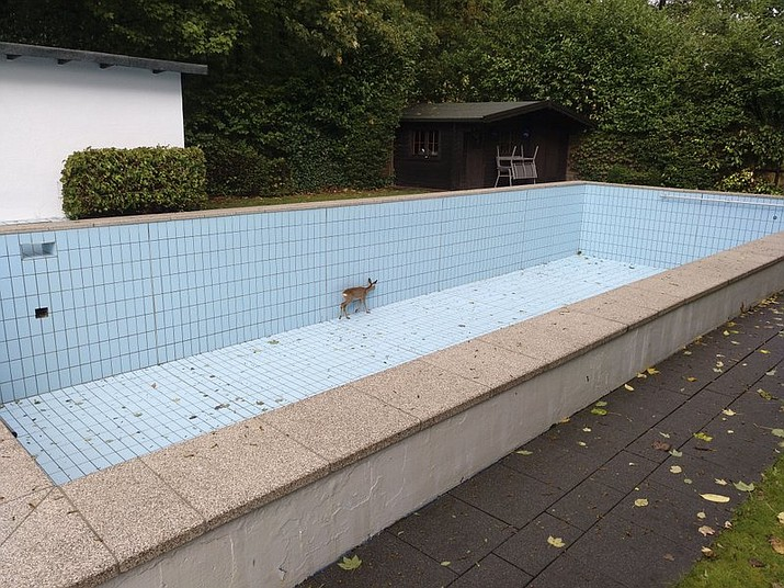 In this Monday Sept. 30, 2019 photo a deer stuck in an empty swimming pool in the village Esborn near the town Wetter an der Ruhr, Germany. Firefighters have freed a deer with the help of an hunter. (Feuerwehr Wetter (Ruhr) via AP)