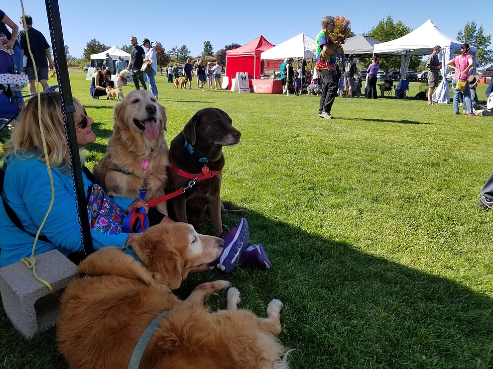 People and animals alike lounge under a tent at Watson Lake Park during Dogtoberfest Sunday, Oct. 6, 2019. The event included vendors, K-9 demonstrations, a costume contest, dog adoptions and much more. (Max Efrein/Courier)