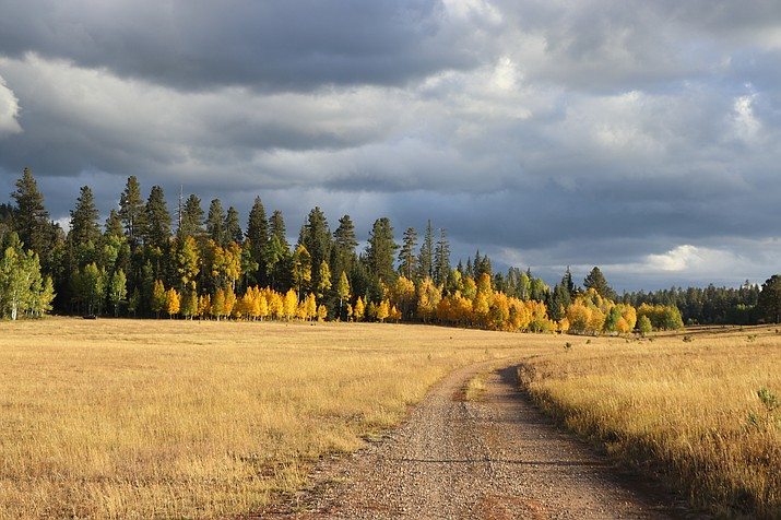 Fall colors are currently peaking on the North Kaibab Ranger District. (Andrew Hostad/Kaibab National Forest)