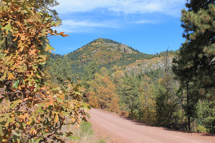 Fall colors bring a splash of gold, orange and red to Bill Williams Mountain. Bill Williams Mountain Road can be accessed via Perkinsville Road south of Williams. (Wendy Howell/WGCN)