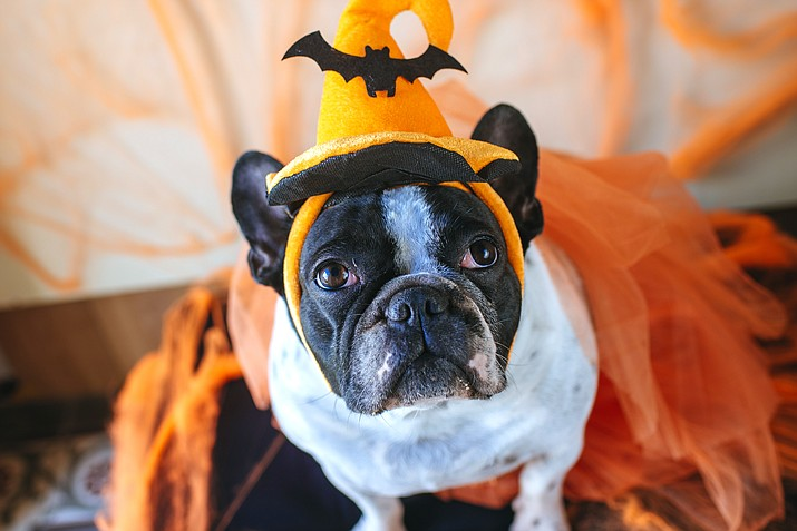 The 5th annual K9 Tricks for Treats event is being hosted by Whiskers Barkery, 225 W. Gurley St. in Prescott from 4 to 6 p.m. on Friday, Oct. 25. (Stock image)