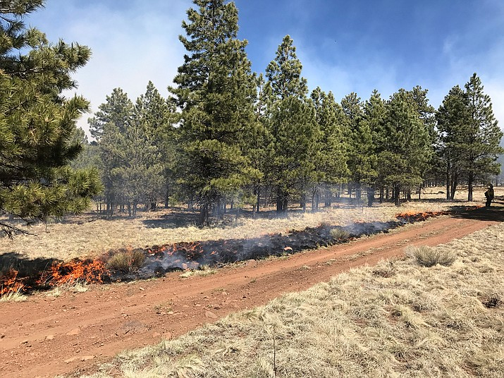 Coconino National Forest conducts a prescribed burn north of the San Francisco Peaks in 2017. The forest has plans for multiple prescribed burns for fall 2019. (True Brown/USFS)