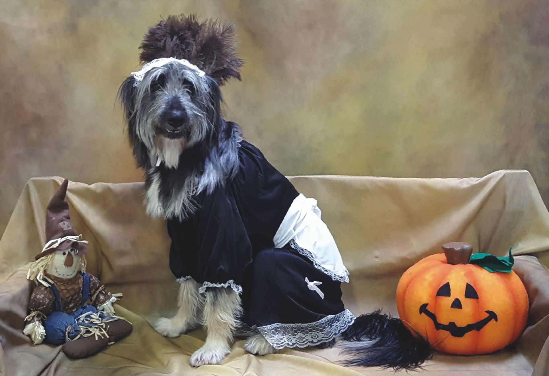 Halloween photos for kids and pets benefits United Animal Friends, Oct. 25