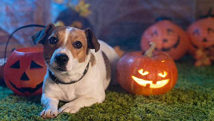 AARF Animal Rescue presents a spooktacular Howl-o-ween bowling fundraiser at Antelope Lanes, 6301 E. 2nd St. in Prescott Valley from 5:30 to 8 p.m. on Saturday, Oct. 26. (Stock image)