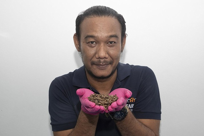 In this Oct. 3, 2019, photo, Thai entrepreneur Thatnat Chanthatham shows crickets at Smile cricket farm at Ratchaburi province, southwest of Bangkok, Thailand. Insects have long been part of the diet of poor rural Thais, but Thatnat - inspired by studies showing bugs are high in protein and raising them does minimal damage to the environment - hopes to broaden the market for baked bugs by packaging them like potato chips and selling them in convenience store and supermarkets. (AP Photo/Sakchai Lalit)
