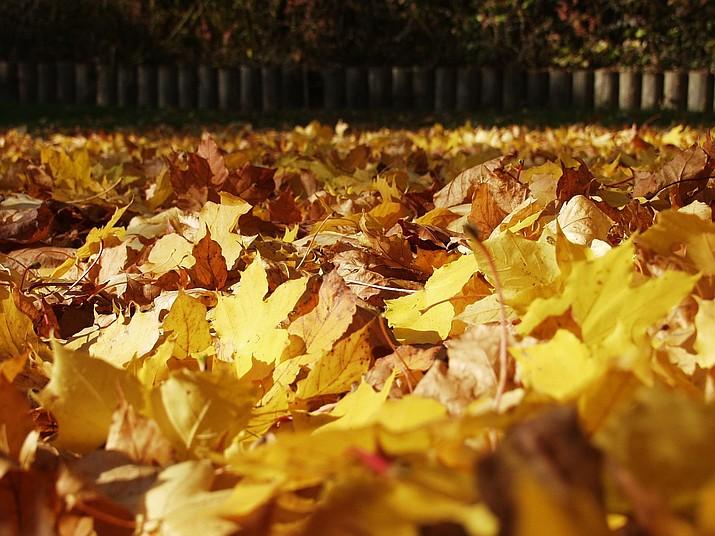 Fall foliage (Ken Lain/Courtesy)