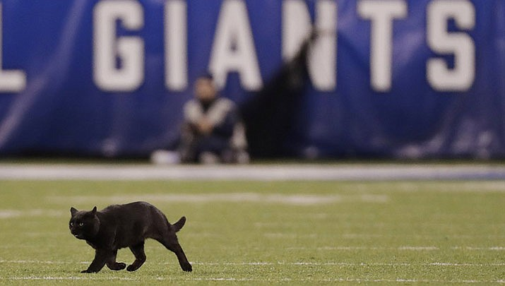 A cat runs on the field during the second quarter of an NFL football game between the New York Giants and the Dallas Cowboys, Monday, Nov. 4, 2019, in East Rutherford, N.J. (AP Photo/Adam Hunger)