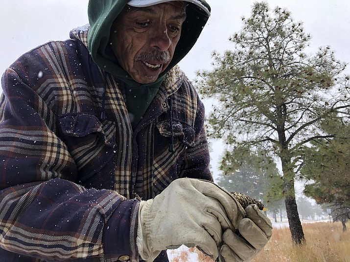 Steven Sandoval, with Santa Clara Pueblo's forestry department, explains the attributes needed for a viable ponderosa pine seed during a demonstration at Bandelier National Monument near Los Alamos, N.M. (Susan Montoya Bryan/Associated Press)
