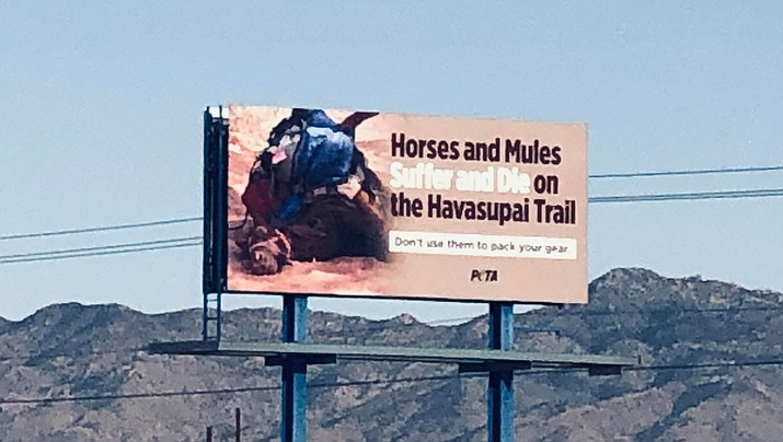 This PETA billboard on Highway 66 at Thompson Avenue near Kingman Airport claims horses suffer and die on the Havasupai Trail in the Grand Canyon. (Photo by Agata Popeda/Daily Miner)