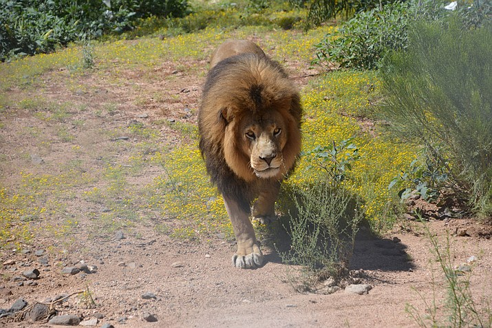 Arizonans can bring a valid state ID to Keepers of the Wild through Jan. 1, 2020 to receive 25% off general admission to the Wild Nature Park. (Courtesy photo)