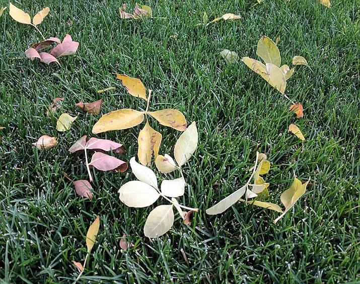 Fall leaves. (Ken Lain/Courtesy)