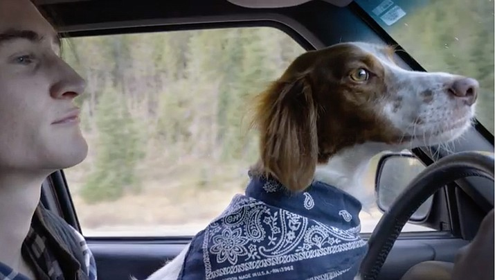 Pass a car and look over, and the person next to you sometimes has a dog on their lap, or they might be eating something or are reaching for an item in the back seat or applying makeup. (Stock image)