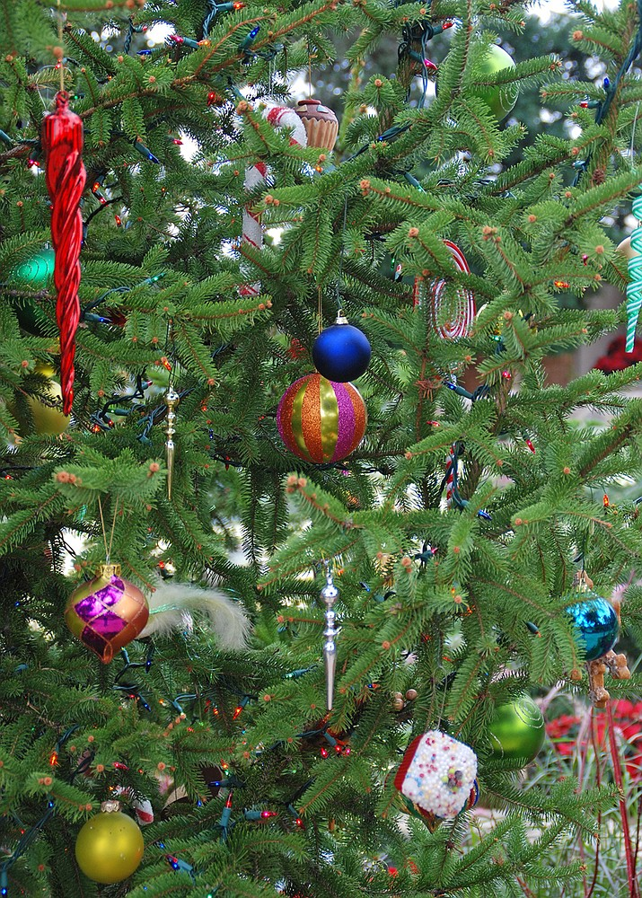 The holiday tree is the center of many family celebrations. Ornaments collected over the years decorate the boughs, while brightly wrapped gifts are carefully placed underneath. (Melinda Myers/Courtesy)