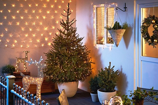 The practice of using living trees over fresh-cut trees to decorate the holidays continues to increase in popularity. (Ken Lain/Courtesy