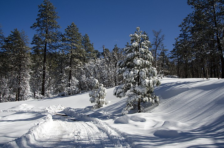 Kaibab National Forest offices on the South Zone are closed today because of snow. (USFS/photo)