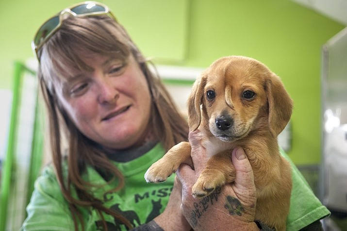 In this Nov. 13, 2019, file photo Mac's Mission animal rescue founder Rochelle Steffen holds a 10-week-old golden retriever puppy with a small tail growing between his eyes, in Jackson, Mo. The dog, named Narwhal the Little Magical Furry Unicorn, that drew international attention because of a tail-like growth on his face, and also drew some unwelcome attention, including death threats, will remain with Steffen, the founder of a group that rescued him. (Tyler Graef/The Southeast Missourian via AP, File)