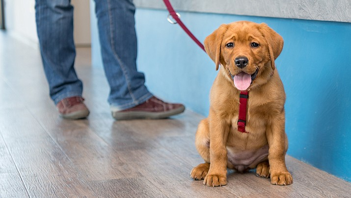 The Mohave County Board of Supervisors passed a new rule this week to ban animals other than service animals from county facilities. (Stock art)
