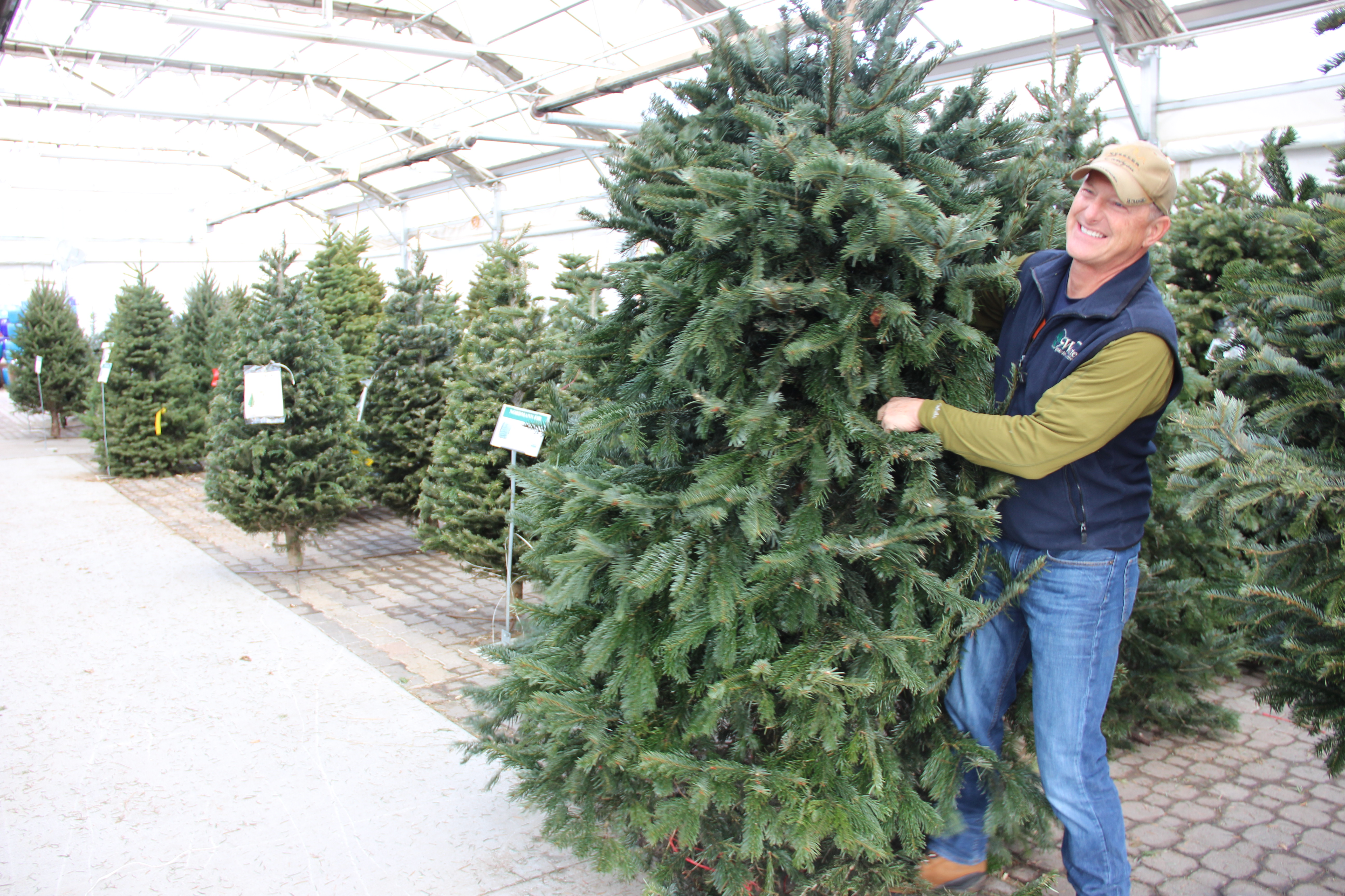 Christmas tree shortage increases prices, limits selection, quality