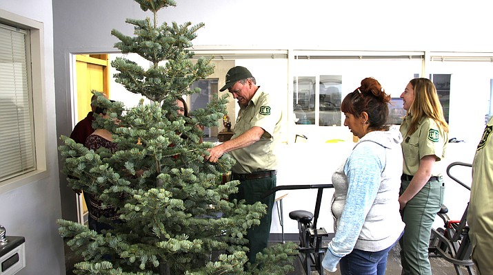 North Kaibab spreads holiday spirit with free Christmas trees
