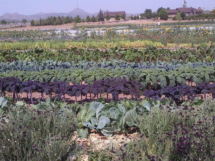 While range livestock is the agricultural crop with the highest value in Yavapai County, we do have many small farms which grow fresh produce in season. (Jeff Schalau/Courtesy)