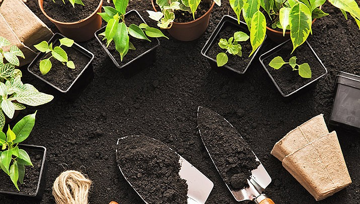 Master Gardener Talk: Indoor Vegetable Gardening is a new event that will take place at the Prescott Valley Public Library, 7401 Skoog Blvd., third floor crystal room from 5:30 to 6:45 p.m. on Thursday, Jan. 2. (Stock image)