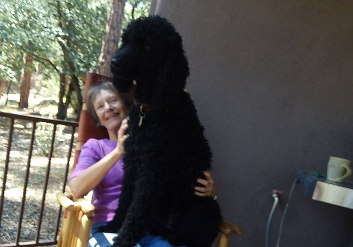 Not all Therapy and service dogs are tiny lap dogs, though many pretend. Pearl is OK with a big hunk on her lap. (Christy Powers/Courtesy)