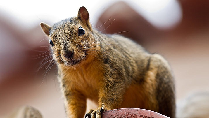 An Atlanta couple said they came home from a winter vacation to find their house had been ransacked by an unusual suspect: a squirrel. (Stock image)