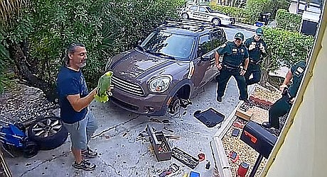 """When someone in a Florida neighborhood heard chilling cries and the words """"Let me out!"""" they dialed 911. Little did they know the cries were that of a 40-year-old parrot named Rambo. (PBCountySheriff, Twitter video capture)"""